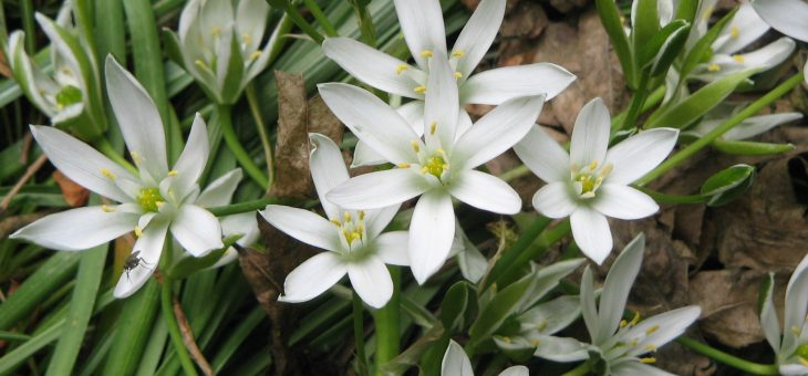 Цветето на утешението