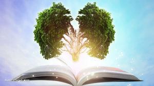 Book-Holistic-Nature-Brain