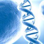 Ново за стволовите клетки